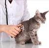 Ветеринарные клиники в Черлаке
